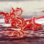 инкубационный период сифилиса