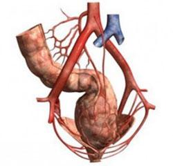 медикаментозное лечение холестерина в крови